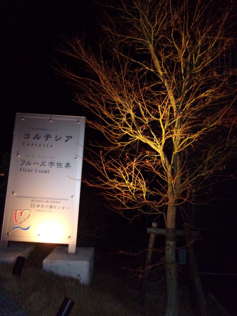 元日のシンボルツリー